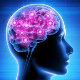 Hersenen-Fotolia.jpg