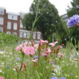 Bloemen leveren positieve bijdrage aan Afrikaanderwijk