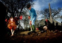 Jongeren, odueren met dementie en mensen met beperking beter af op zorgboerderij