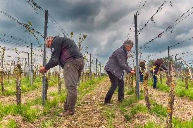 Arbeidsfit worden met dagbesteding in de wijngaard